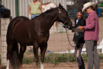 Sunflower Horse Show